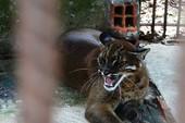 Công viên nước Củ Chi nuôi thú rừng bất hợp pháp