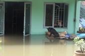 Cảnh ngập ở Sài Gòn chẳng khác chốn thôn quê