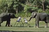 Thích thú nhìn chú voi vẽ tranh