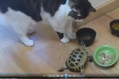 Chú rùa bá đạo nhất quả đất