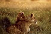 Những khoảnh khắc đẹp về tình mẫu tử của loài vật