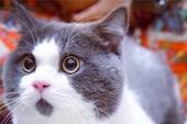Đáng yêu chú mèo luôn biểu hiện trạng thái ngạc nhiên