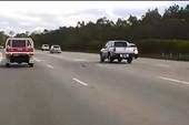 Xem chim hải âu bay đua với xe tải