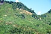 Thi thể người phụ nữ bị trói vào gốc cây trên đồi chè