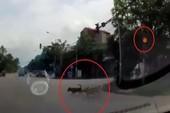 'Phát cuồng' với 3 chú chó đợi đèn đỏ mới sang đường