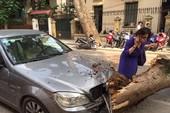Cổ thụ đổ giữa phố Hà Nội, đè bẹp nhiều ô tô và xe máy
