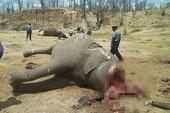 Ớn lạnh, nhân viên sở thú chặt đầu voi vì chê lương thấp