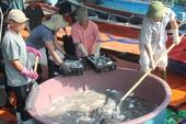Ngư dân Quảng Bình vui vì bán được hải sản, tàu thuyền tấp nập ra khơi