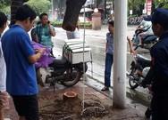 Hà Nội: 1 cây sưa đỏ bị cưa trộm trong đêm mưa bão