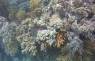 Ngỡ ngàng ngắm rạn san hô tuyệt đẹp ở đảo Hòn Mun