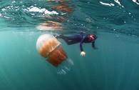 Loài sứa khổng lồ xuất hiện làm người dân Anh khiếp đảm