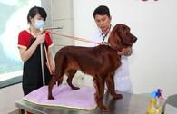 Bên trong khách sạn 5 sao cho thú cưng độc nhất Việt Nam