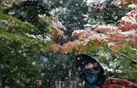 Ngắm tuyết rơi sớm tuyệt đẹp ở Nhật Bản