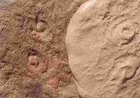 Phát hiện hóa thạch cổ đại, đặt theo tên cựu Tổng thống Obama