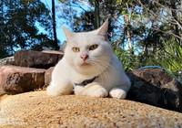 Bị dân mạng chỉ trích vì cho mèo cưng... ăn chay trường