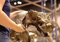 Phát hiện hóa thạch khủng long bọc thép mới