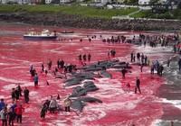 Kinh hoàng tập tục giết thịt cá voi