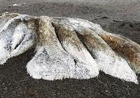 Kinh hãi phát hiện 'thủy quái' đầy lông lá dạt vào bờ biển