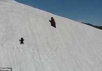 Gấu con không bỏ cuộc trước đỉnh núi tuyết gây bão mạng