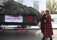 Lần đầu tiên ông Trump đón cây thông Giáng sinh cùng phu nhân