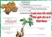 Ngọc Linh - loài sâm tốt nhất thế giới chỉ có ở Việt Nam