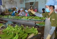 Mỹ-Trung ăn miếng trả miếng: Hàng Việt bị vạ lây