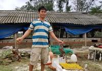 50.000 con gà chết trắng chuồng sau lũ