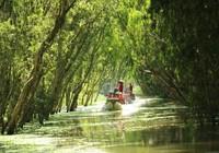 Du khách ngoại thích bắt cá, cưỡi xe bò... ở miền Tây
