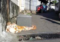 Nghi con rủ bạn trộm két sắt của gia đình ở Phú Nhuận