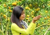 Giáp Tết 'phượt' Đồng Tháp ghé vườn quýt hồng Lai Vung
