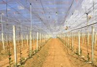 Lưới chống côn trùng 'made in Vietnam'