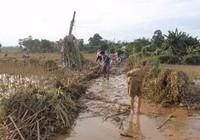 Quảng Ngãi: Phân bổ 1.000 tấn gạo cứu đói cho dân