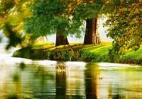 Tận hưởng công viên xanh ngút ngàn tại Jamona Heights