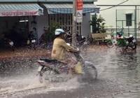 Xuất hiện 'cơn mưa vàng' ở Cần Thơ