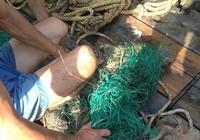 Đã bắt được cá sấu sổng chuồng bơi trên sông Xoài Rạp