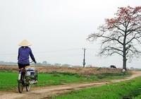 Tháng Ba mùa hoa gạo