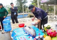 Du khách phát hiện cá voi chết dạt vào bờ biển Cửa Lò