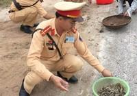 CSGT giúp dân nhặt tôm, quét đá dăm trên đường