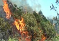 Cháy rừng vì nắng nóng hơn 40 độ C, huy động 1000 người cứu hỏa