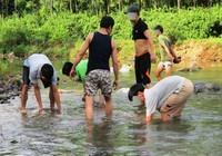 Đổ xô đi săn rùa vàng 350 triệu/kg ở Hà Tĩnh