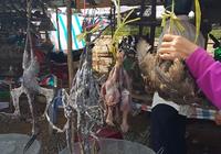 Báo động: Tận diệt chim trời trên những cánh đồng miền Tây