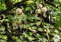 11 loài có nguy cơ tuyệt chủng tại Việt Nam