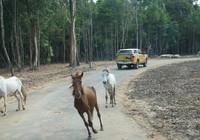 Khai trương vườn thú bán hoang dã lớn nhất châu Á