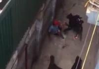 Hà Nội: Kinh hoàng 4 con chó dữ xông vào cắn chủ