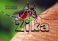 Hai người nhiễm Zika sống tại TP.HCM và Khánh Hòa