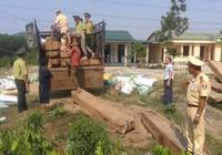 Ngụy trang dấu gỗ lậu dưới đống bao tải