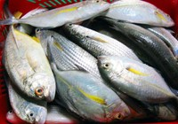 Quảng Ngãi chỉ đạo về xác nhận hải sản an toàn cho ngư dân