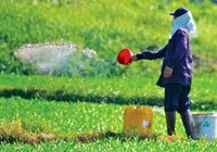 Tăng phạt nặng đối với sử dụng thuốc cấm trong cây trồng