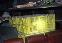 Phát hoảng vì hơn trăm con rắn hổ mang trên xe khách