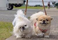 Muốn nuôi chó phải thông báo với UBND xã